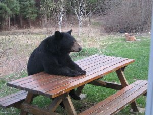 picnic_table_bear_R.jpg